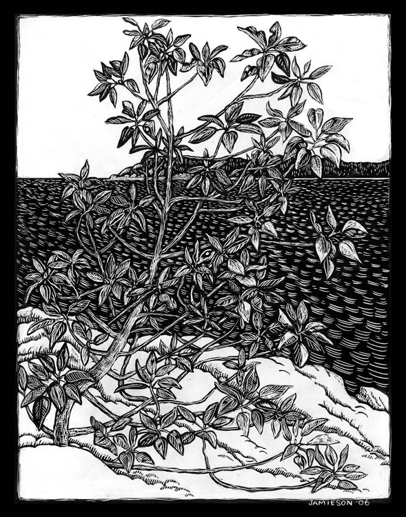 "Arbutus Tree, 2003 Marion-Lea Jamieson ink on paper 14"" h x 11"" w"